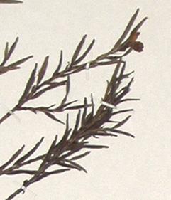 322-65.jpg