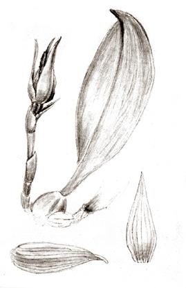 96-1636a.jpg