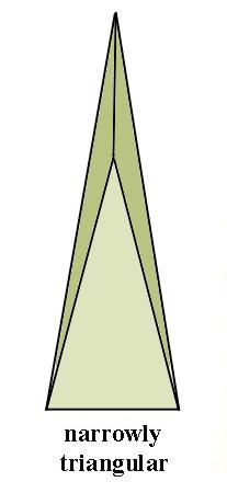 cuneate1.jpg