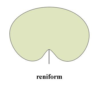 reniform.jpg