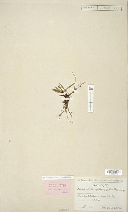 214-5t.jpg