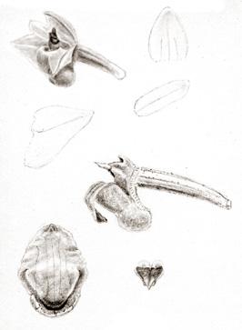 57-82b.jpg