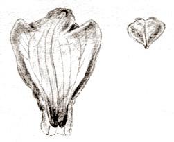 57-137b.jpg