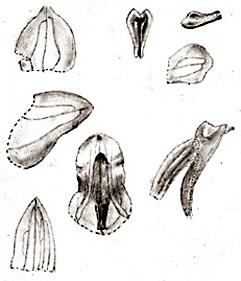 57-150.jpg
