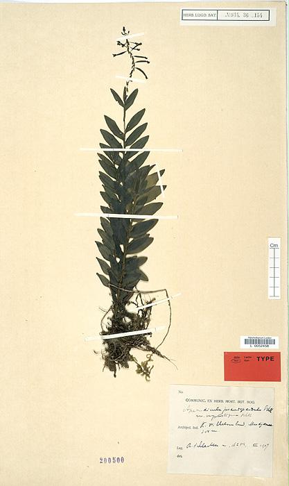 57-168t.jpg