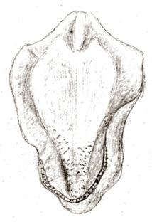 57-191b.jpg