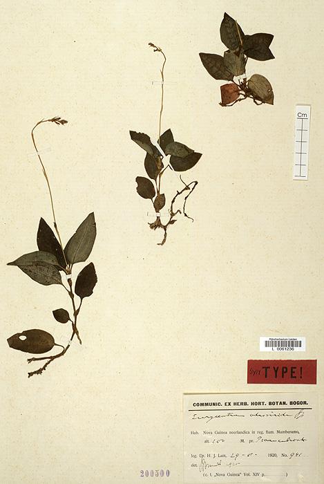 298-2v.jpg