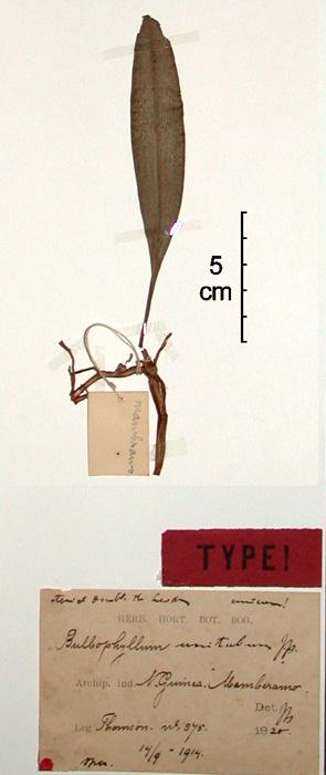 96-1931t.jpg