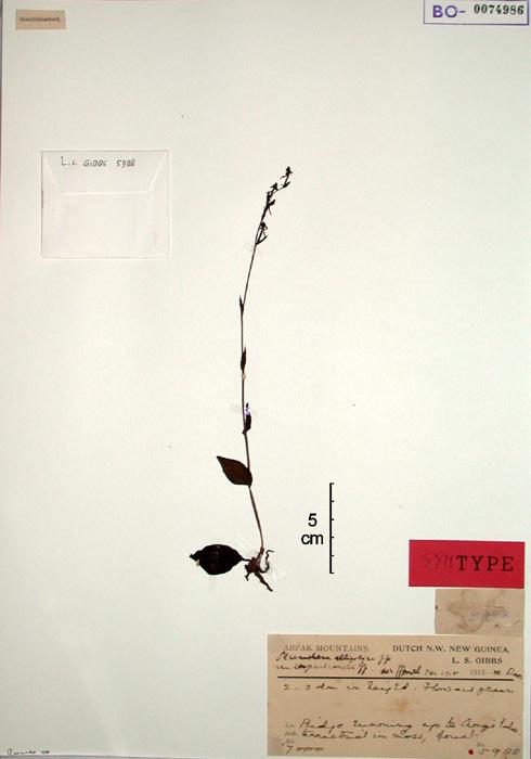 556-72t.jpg
