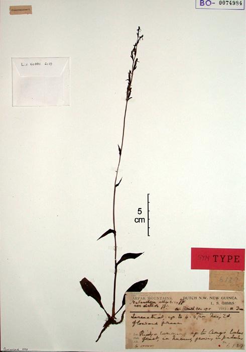 556-71t.jpg