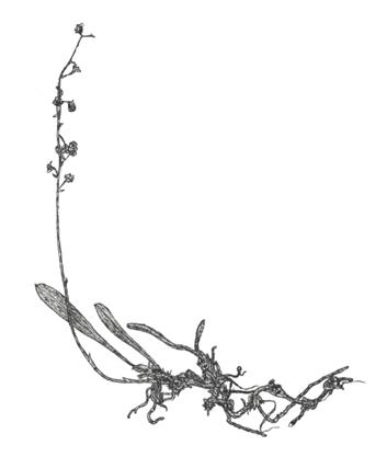 549-246b.jpg